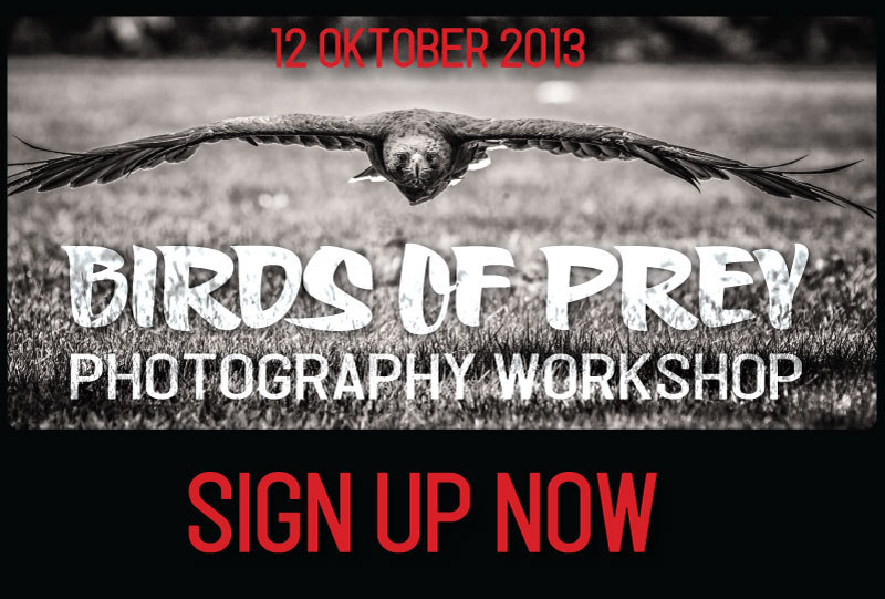 """Special """"Birds of Prey"""" nature photography workshops in the Veluwe"""