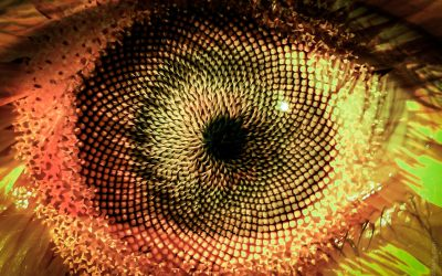 Artwork: Sunflower eye