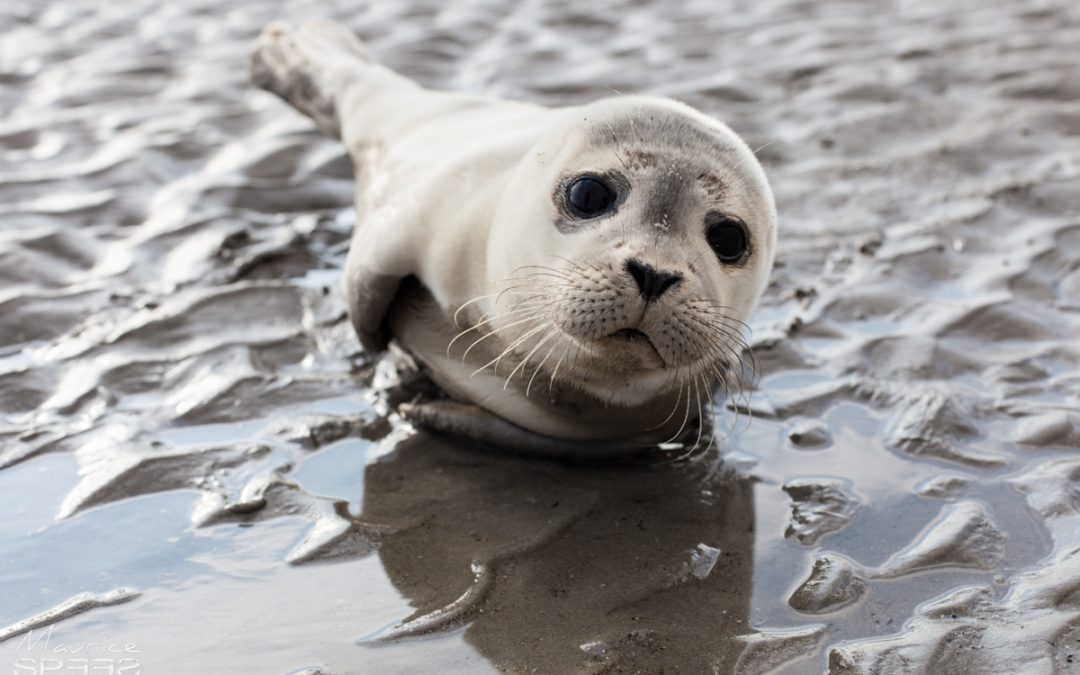 Waking up with a stranded baby seal at my feet
