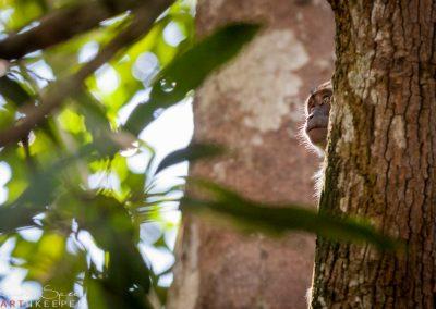 Hide and seek, Borneo