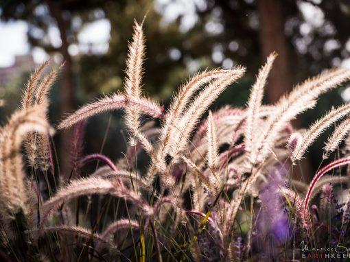 Enlightened Wheat
