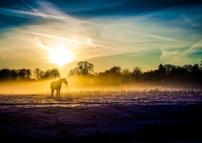 Winterlight series: Horse in mist