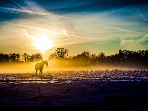 Winterlight series: horse in the mist