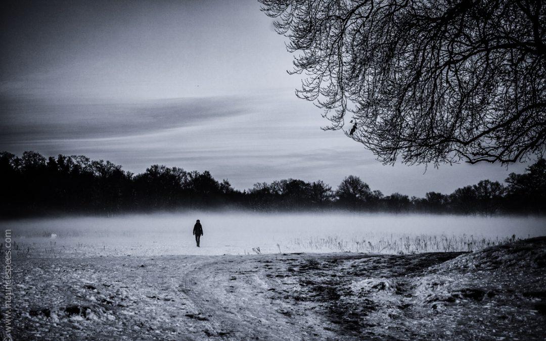 Winterlight series: Solitude