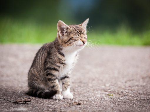 Smiley cat