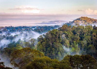 Borneo Rainforest before sunrise