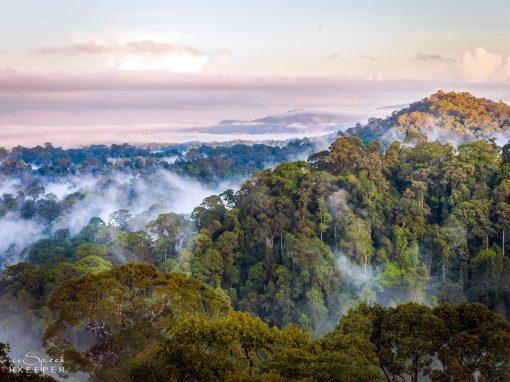 Earthkeepers: Born-eco, Borneo