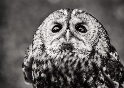 Young night owl, before I fly