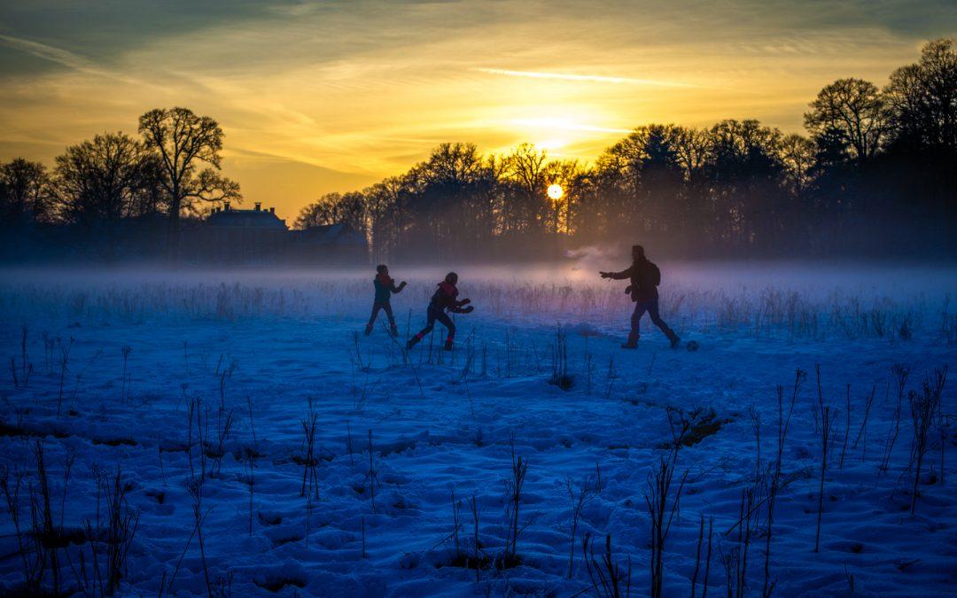 'Winterlight series: Purple Snowball
