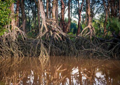 Borneo Mangrove, Brunei